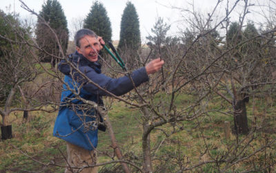 Community Pruning