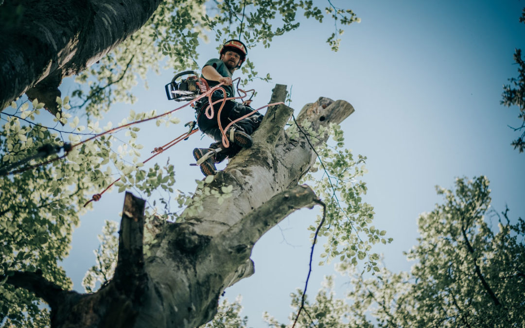 Tree Surgeon Climber Required