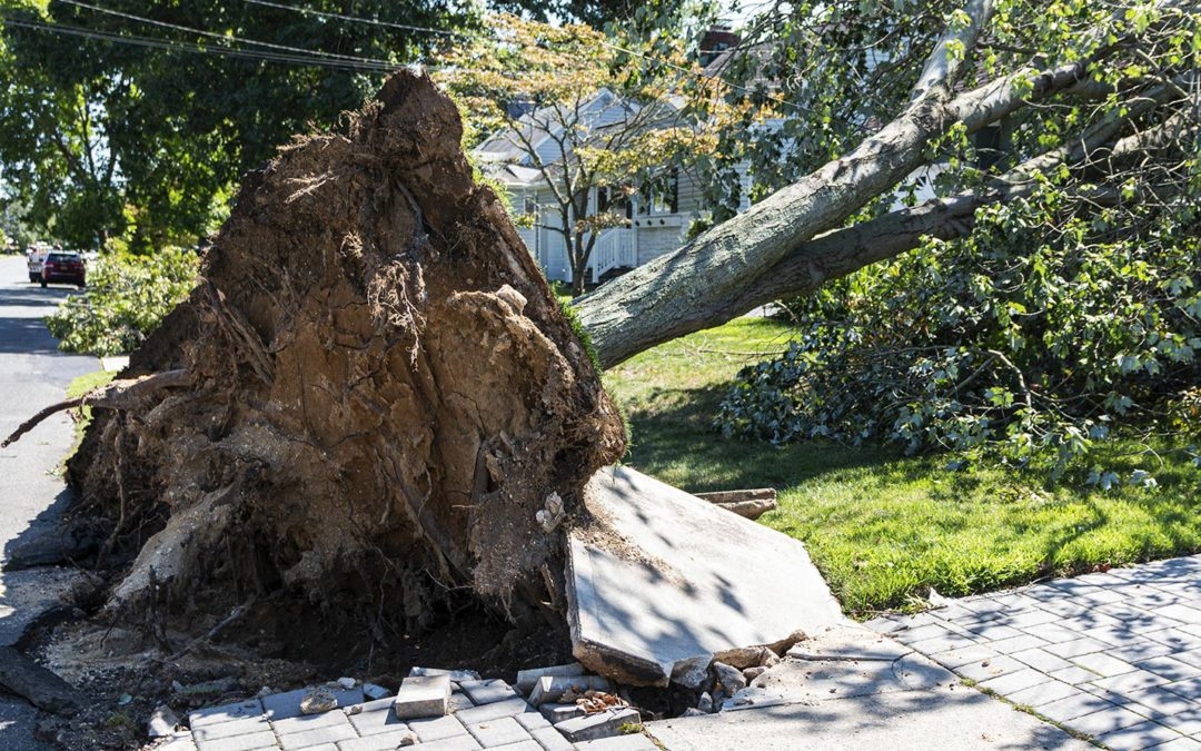 High winds tree safety