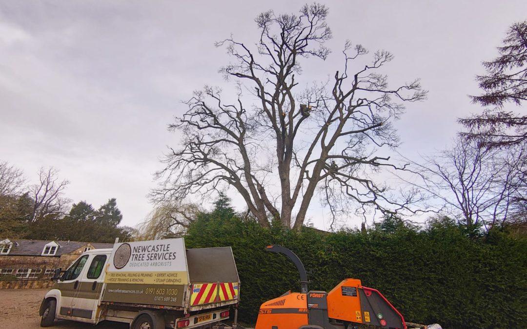 Crown Reducing in Northumberland